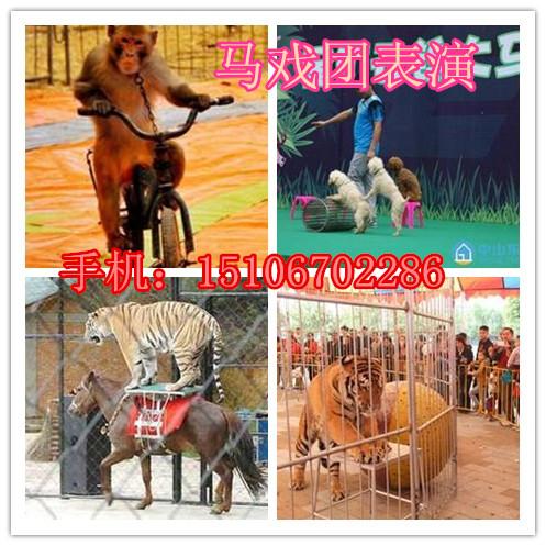 马戏团动物表演,特种珍禽展览等业务
