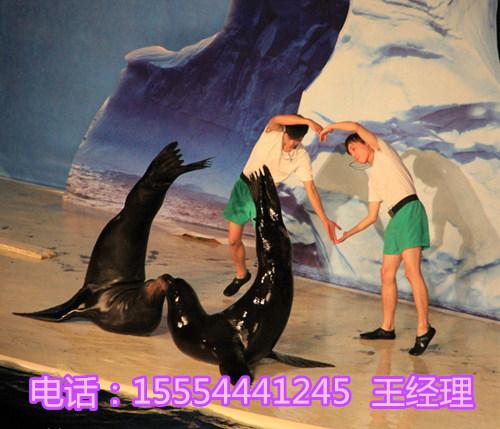 皇家马戏团动物表演 丽江市