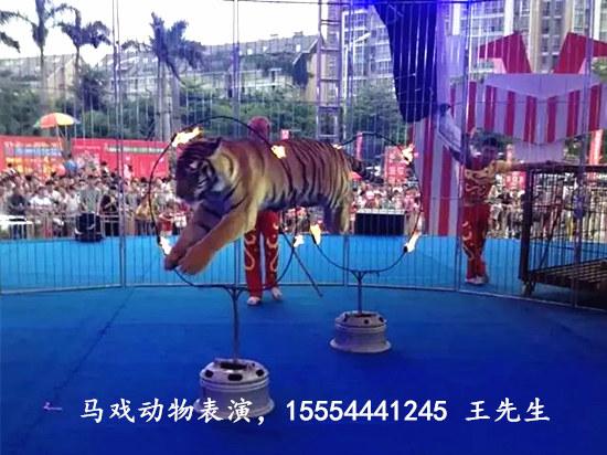 动物马戏团表演