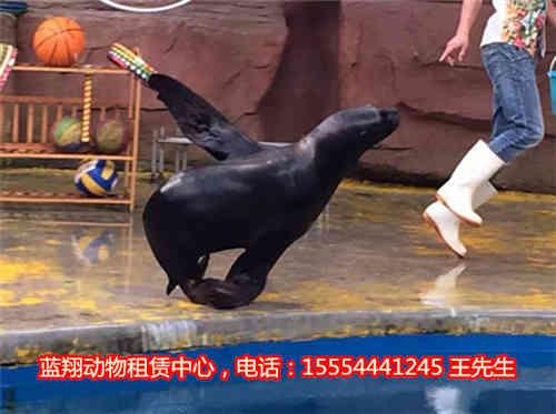 浙江省动物出租-租赁马戏团表演