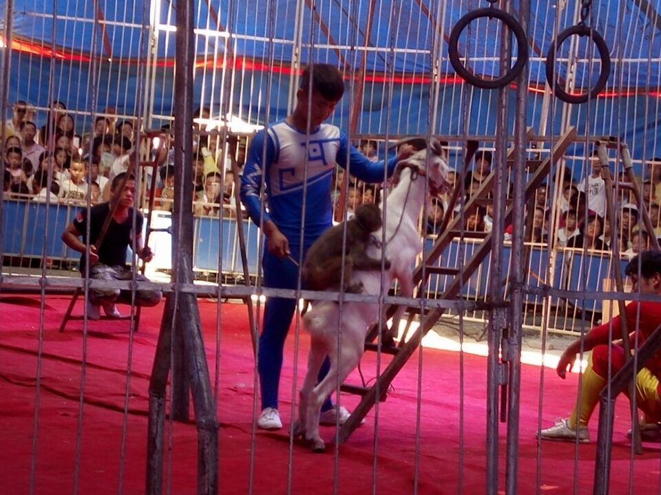 动物马戏团表演节目单