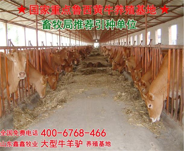 牛舍木板地面图