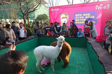 哪里有羊驼出租(马戏团动物表演)安徽濉溪县
