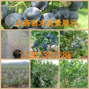 小苹果果树盆景栽培: