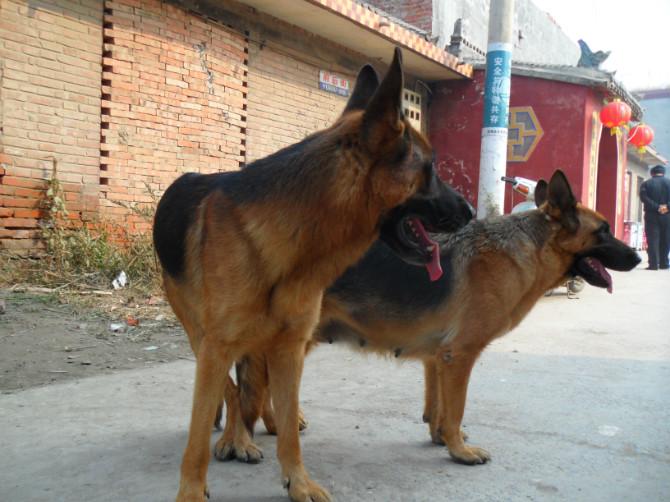 动物logo设计马犬