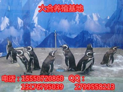 qq企鹅头像 倒立
