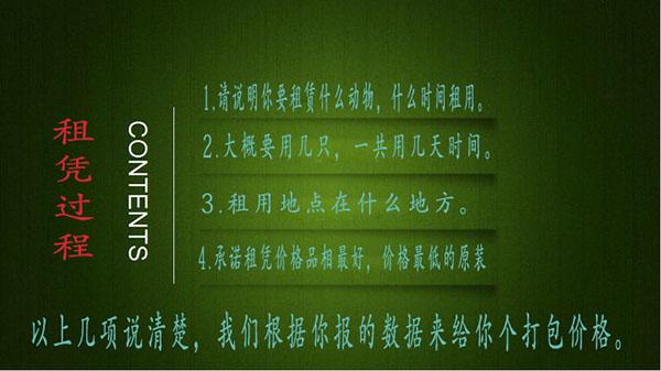 鹤岗马戏团租赁活体动物表演租赁