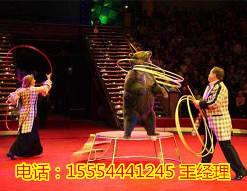 哪里有马戏团动物表演