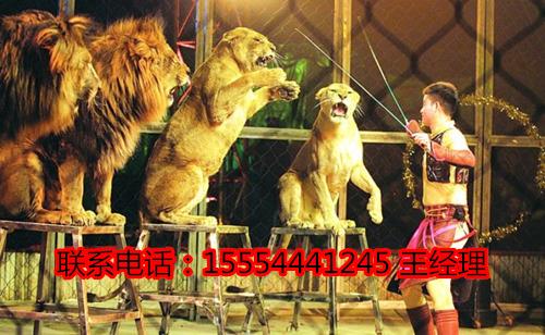 是中国国家二级保护动物
