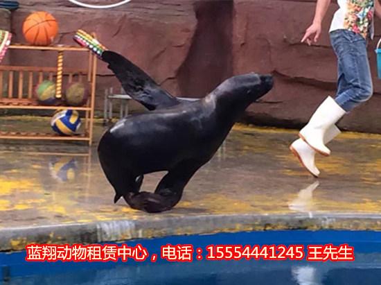 租马戏团动物表演