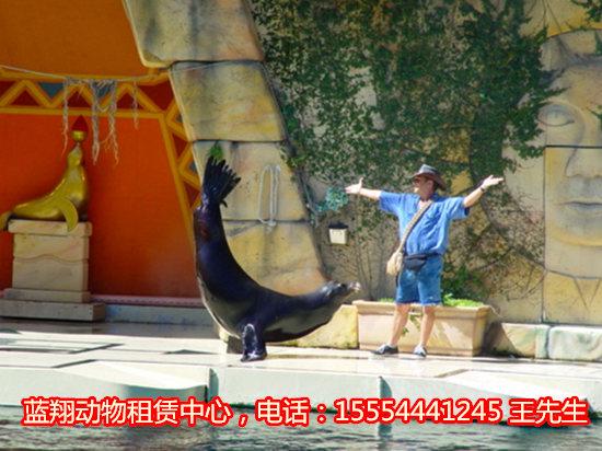 出租马戏团-出租动物表演