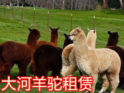 勉县楼盘租赁羊驼 动物珍禽出租