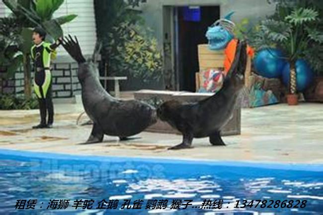 海洋馆动物包括:海狮,海豹,麦哲伦企鹅 ,表演节目有:顶球,学人