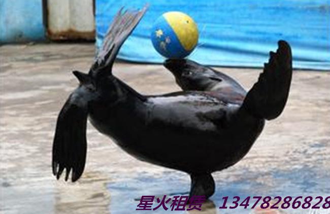 > > 正文  海狮表演艺术巴马瑶族海狮是可以水陆两栖的哺乳动物,其