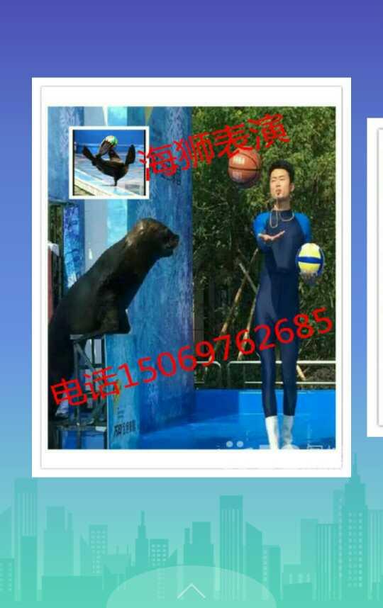 韶关哪里有海狮动物出租以及杂技表演的