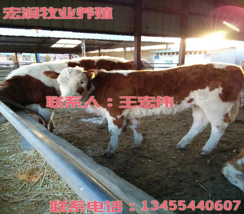 家庭废物利用小制作牛