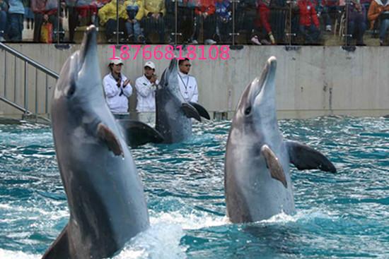 海狮表演,租赁海狮,出租海狮,海洋动物展览 联系人:李经理(男)