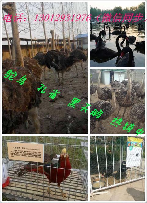 庆元县出租各种珍禽小动物羊驼