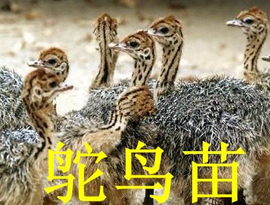 小哺乳动物和一些昆虫等小动物