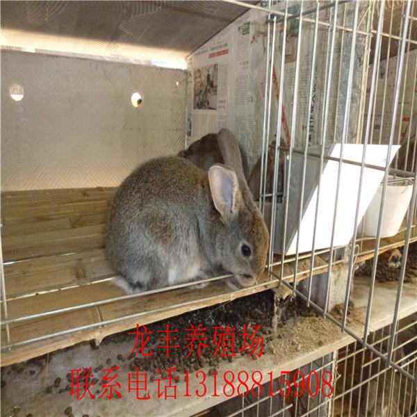 獭兔养殖场 獭兔什么地方有