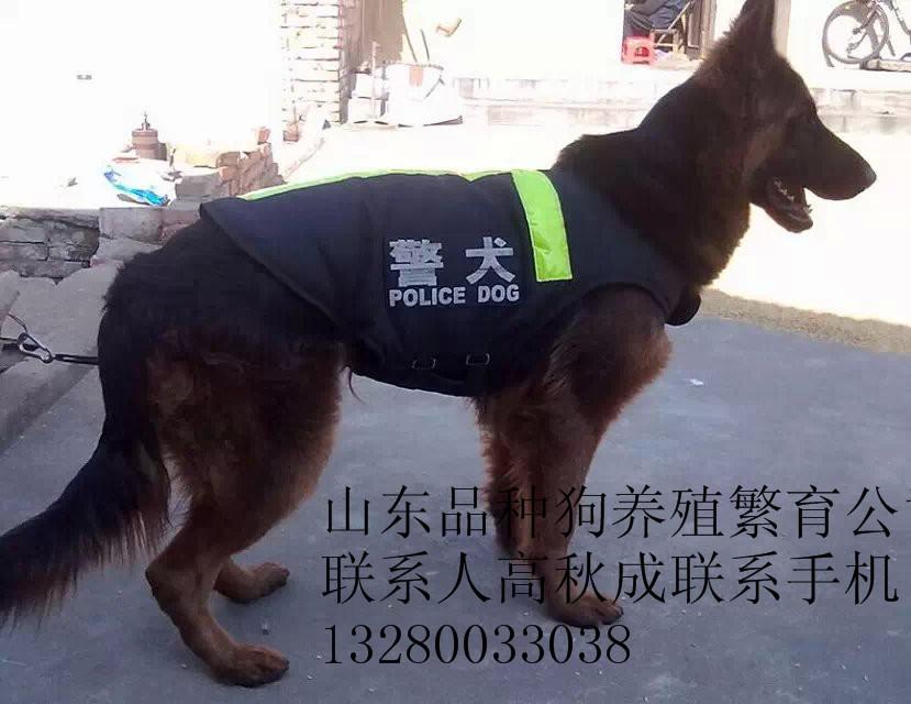 江门大型犬品种大全我家有!