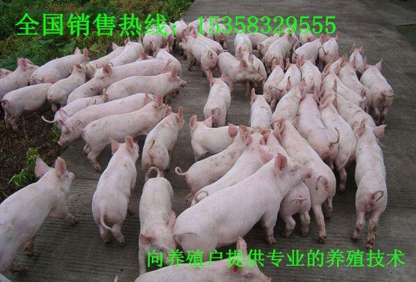 动物 羚羊 猪 600_407